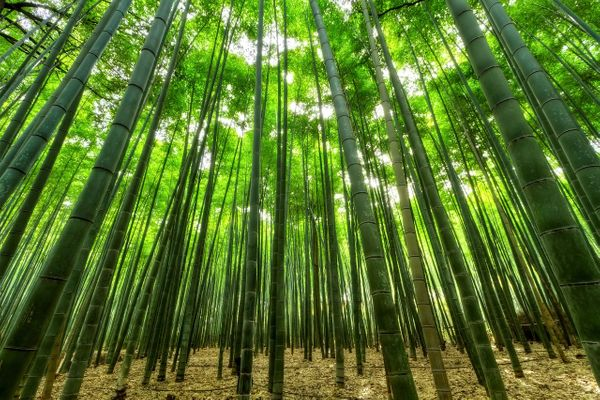 The Chinese Bamboo Tree : An Important Lesson For Entrepreneurs